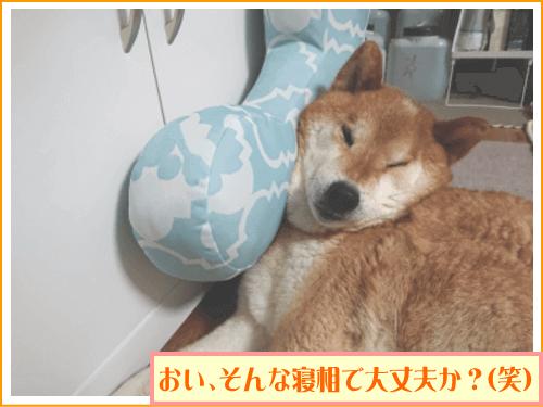 おい、そんな寝相で大丈夫か?(笑)