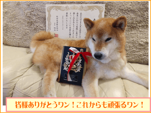 15歳の誕生日だワン!川西市から表彰されたんだワン!ありがとうね!
